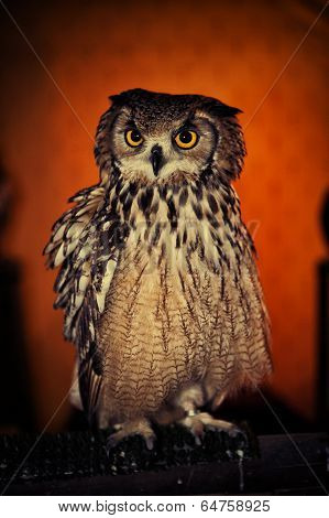 An Eurasian Eagle Owl (b. Bubo), One Of The Worlds Largest Owls, Looking Directly At The Camera