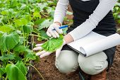 pic of biotechnology  - Biotechnology woman engineer with a clipboard and pen examining a plant leaf for disease - JPG