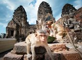 picture of monkeys  - Lopburi Thailand - JPG