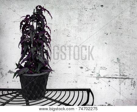 Dark Plant On Concrete Wall Background