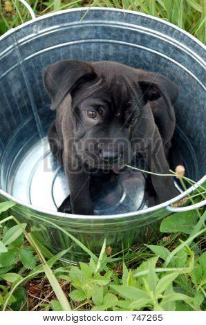 Puppy in a Tub