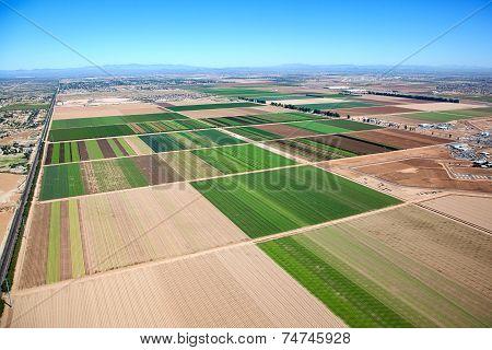 Farm Phoenix