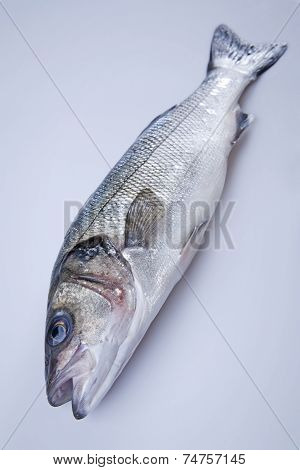 Freshly Bass Fish