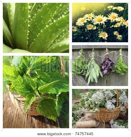 Collage of herbs