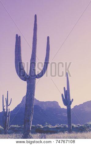 Cactus saguaro tree with mountain background in Arizona