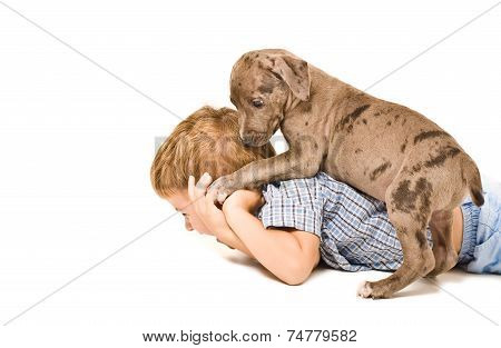Boy and puppy pit bull having fun