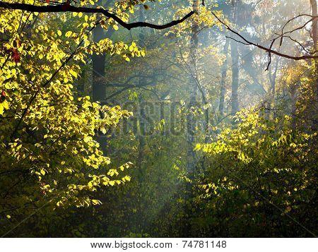 Sun Rays Through Leafage In Autumn