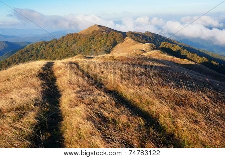 Autumn landscape in the morning. Road to the mountains. Light of the sun on the grass. Carpathians, Ukraine, Europe