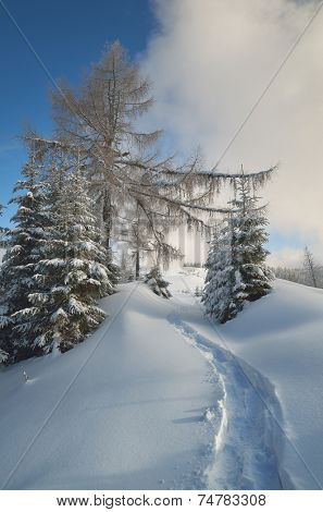 Winter landscape. Trail in the snowy forest. Sunny day. Carpathian mountains, Ukraine, Europe. Christmas landscape