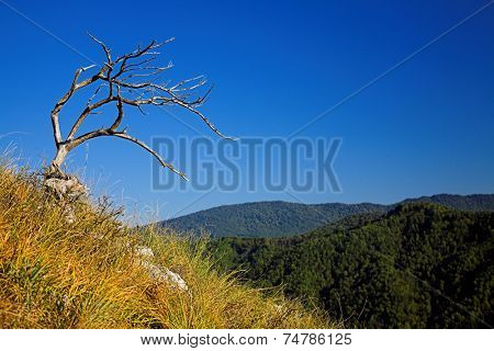 Dead tree on the mountainside against blue sky