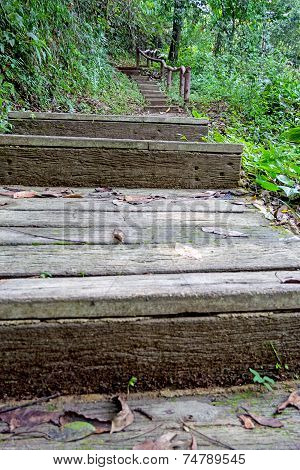 Stairs In The Rainy Season Green Forest