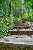 pic of rainy season  - Stairs In The Rainy Season Green Forest - JPG