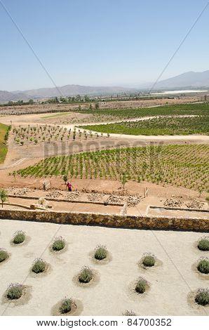 ENSENADA, BAJA CALIFORNIA, MEXICO- MARCH 21, 2015: View of a vineyard at Valle de Guadalupe. Ensenada, Baja California, México. 90% of Mexico's wine comes from this region.