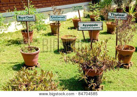 Ayurvedic Herb Garden
