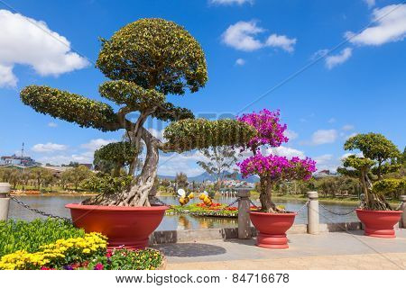 Bonsai trees at City flower garden in Dalat, Vietnam