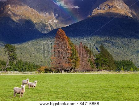 Mountain landscape with forest and grazing sheep, South Island, New Zealand
