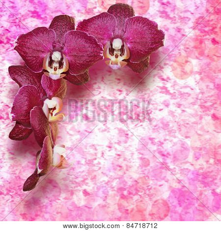 burgundy orchid flowers on a vintage background