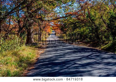 Beautiful Fall Foliage a Small Country Road