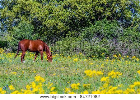 Bright Yellow Texas Wildflowers with Brown Horse