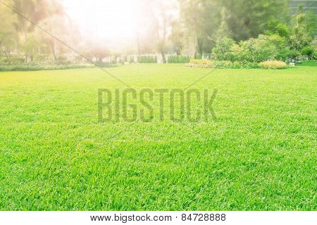 Vibrant Of Playground,meadow ,green Grass Field