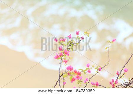 Small pink azalea with sandy beach background