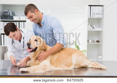 Vet using nail clipper on a dog with its owner in medical office
