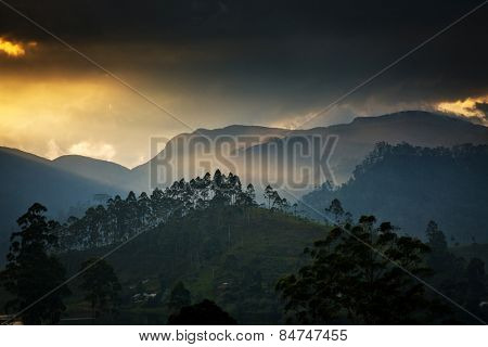 Panorama of the tea plantations at sunset - Sri Pada peak in the background