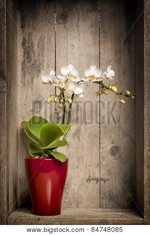 An image of a white mini orchid with a wooden background