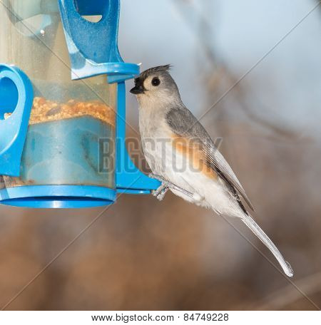 Tufted Titmouse at a bird feeder in winter