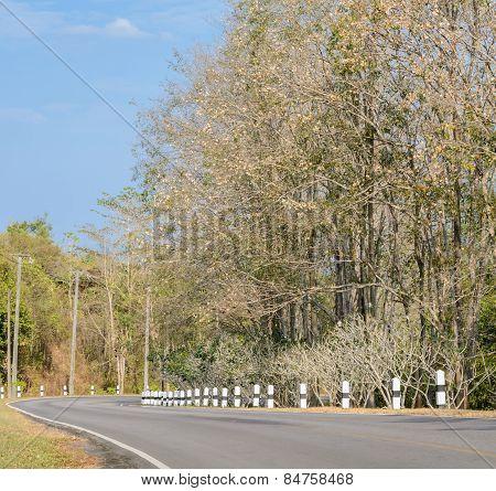 Asphalt Curve Road With Deciduous Tree