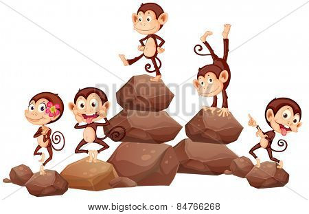 monkeys standing on rocks