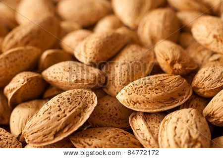 Almonds in shell close up