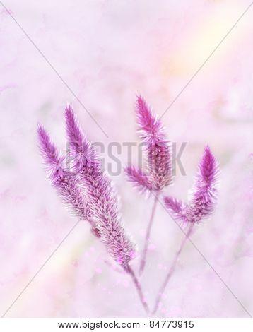 Digital Painting Of Purple Flowers.Soft Focus