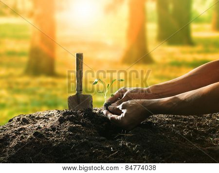 Conceptual Of Hand Planting Tree Seed On Dirty Soil Against Beautiful Sun Light In Plantation Field