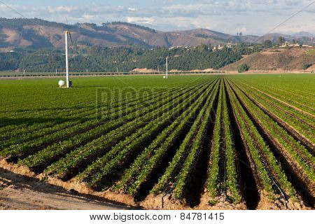 An agricultural field on a sunny day in California