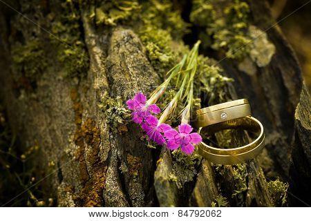 Beautiful Engagement Rings On Tree Bark