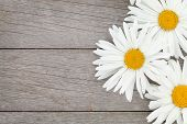 image of daisy flower  - Daisy camomile flowers on wooden table background with copy space - JPG