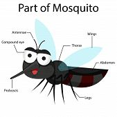 pic of mosquito  - Illustrator parts of Mosquito cartoon and education - JPG