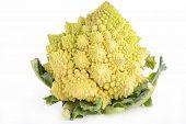 picture of romanesco  - romanesco cabbage - JPG