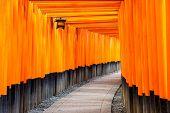 picture of inari  - Fushimi Inari torii gates in Kyoto - JPG
