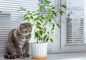 foto of boring  - Sad cat on the windowsill. She is bored.