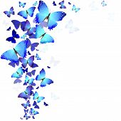 picture of flying-insect  - background of beautiful blue butterflies on a white background - JPG