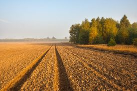 picture of green-blue  - plowed field with tractor traces and distant forest at sunrise - JPG