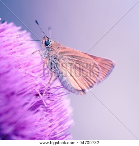 Macro Shoot Of  Butterfly On Pink Flower