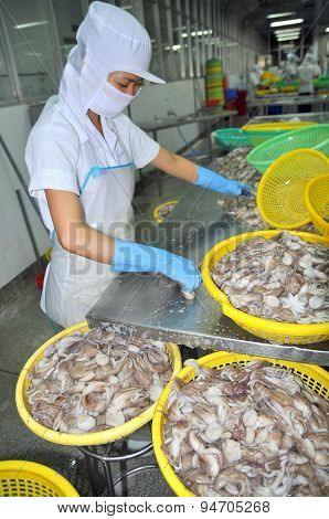 Vung Tau, Vietnam - September 28, 2011: A Woman Worker Is Classifying Octopus For Exporting In A Sea