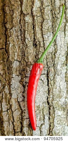 Red Chili On Bark