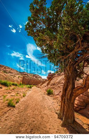 Single Tree In The Canyon