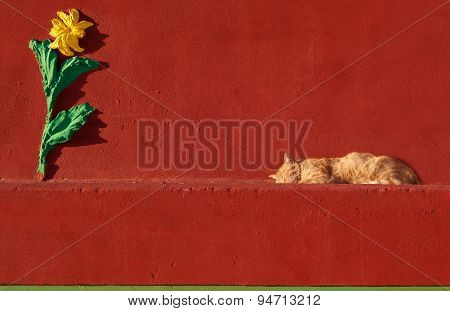Sleeping cat in red wall background