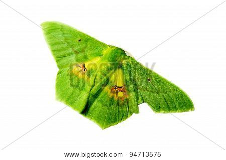 Green Butterfly Isolated, Clipping Paths