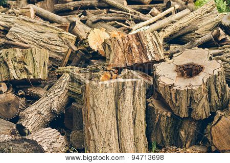 Felled Logs, Branches And Stumps Are Piled In A Heap